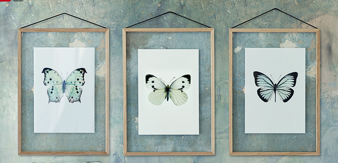 cox and cox butterfly prints