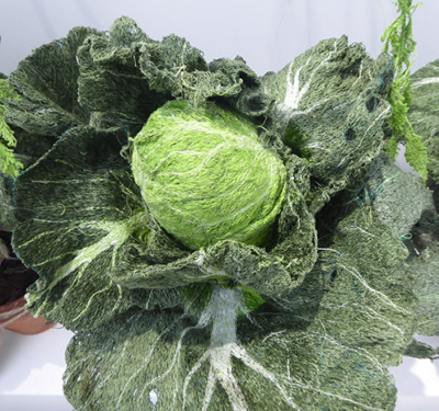 Cabbages-&-Nettles