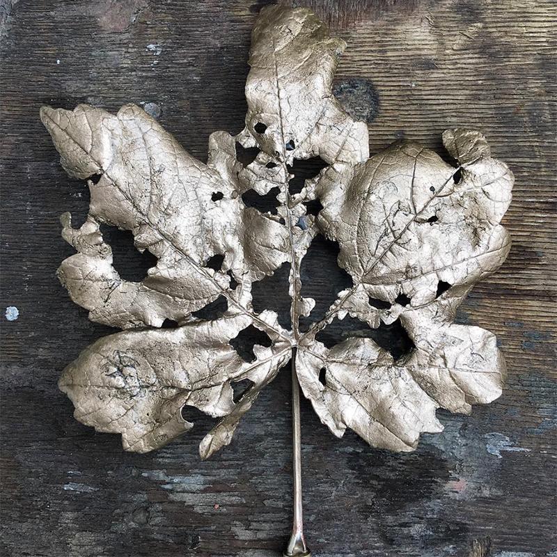Ashleaf - Bronze Sycamore leaf