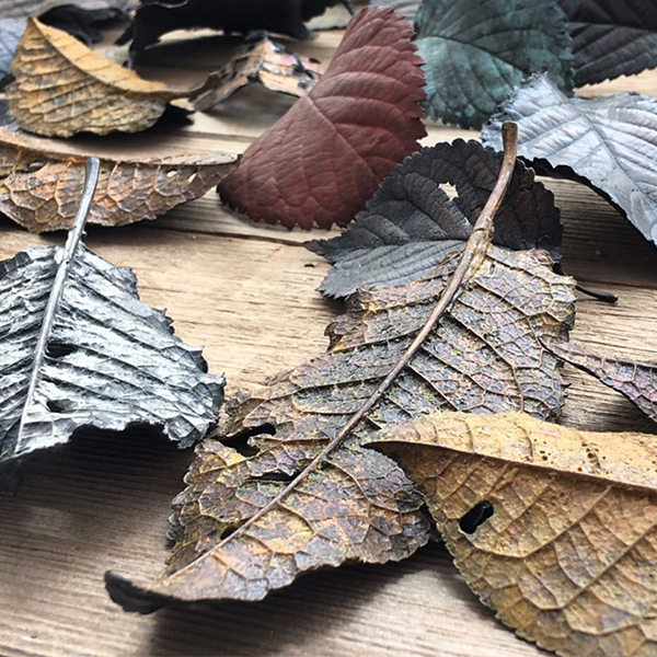 Ashleaf - fallen bronze leaves