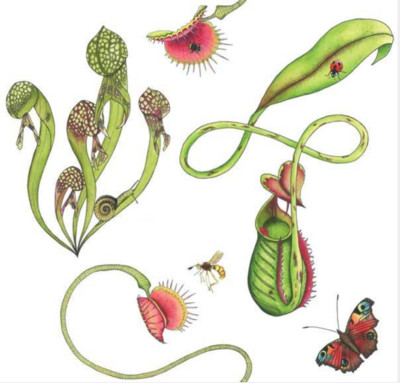 Carnivorous plants - Wilful Ink-100% Design