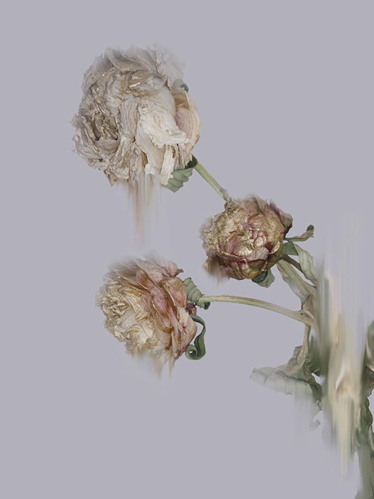 Simone Webb - Glistening Decay