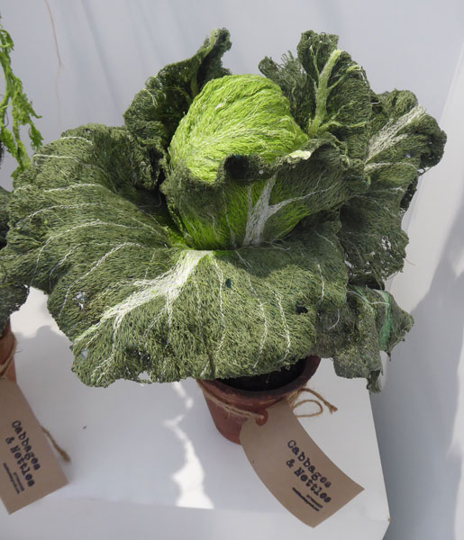 Cabbages and Nettles - Cabbage